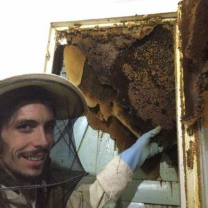 Apiculteur retire construction de cire d'abeilles - Tarn et Garonne - 82