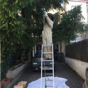 Apiculteur récupère dans un sapin à Bouillac un essaim d'abeille suspendu devant une habitation