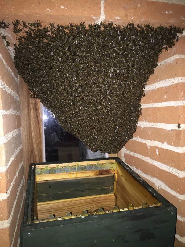essaim d'abeille dans une lucarne de petite fenêtre en hauteur sur une façade de maison