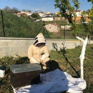 Essaims d'abeilles rentrant dans la ruche après la récupération