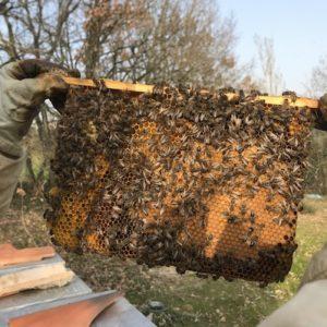 barrette de ruche warré